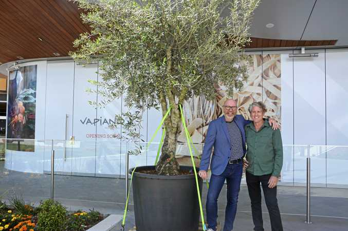 COMING TOGETHER: With the olive tree to be planed inside Vapiano is Will Cooke (left) and Australis Plants' Greg O'Sullivan.