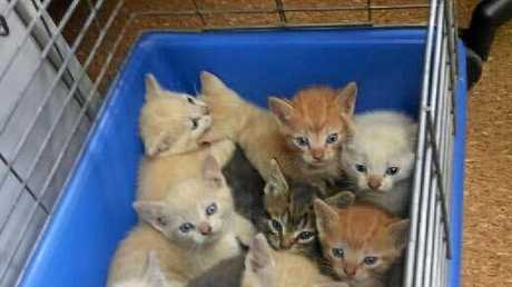 11 kittens found dumped in a forest in a box were brought to the Soquilichi Rescue Shelter on Tuesday.