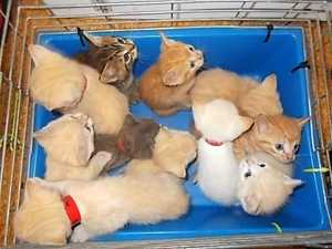 'Always look in boxes': Coast under onslaught of dumped pets