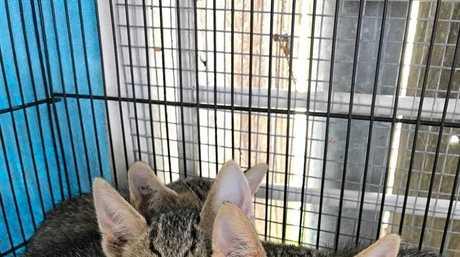 The three surviving kittens.