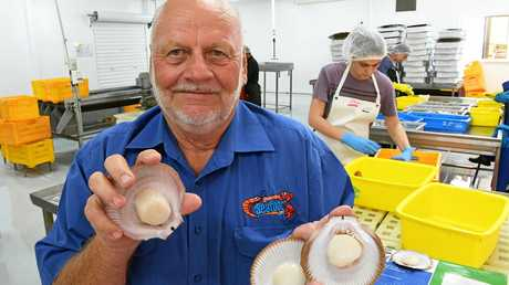 HELP NEEDED: Australian Seafood.com manager Barry Ehrke with some freshly processed scallops.