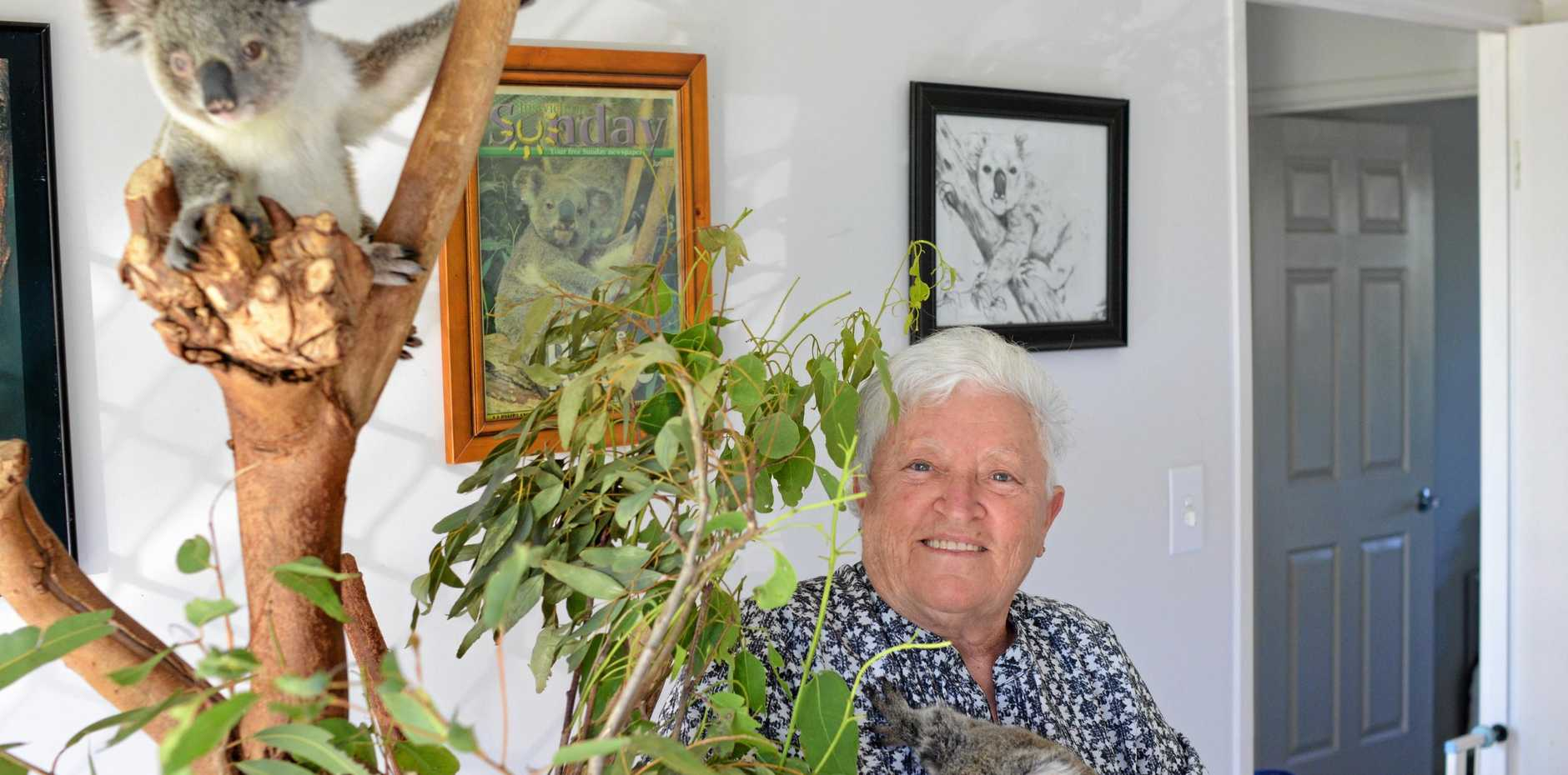 KEY CARER: Experienced and passionate Koala and Possum carer Marilyn Spletter with Lindsie and Scarlett.
