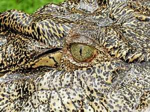 Latest 'croc' sighting false alarm