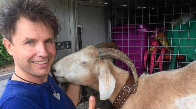 Nomadic comedy duo Gary the Goat and Jimbo rolled through Rockhampton this week, days before the four-legged internet sensation died of a heart tumor.