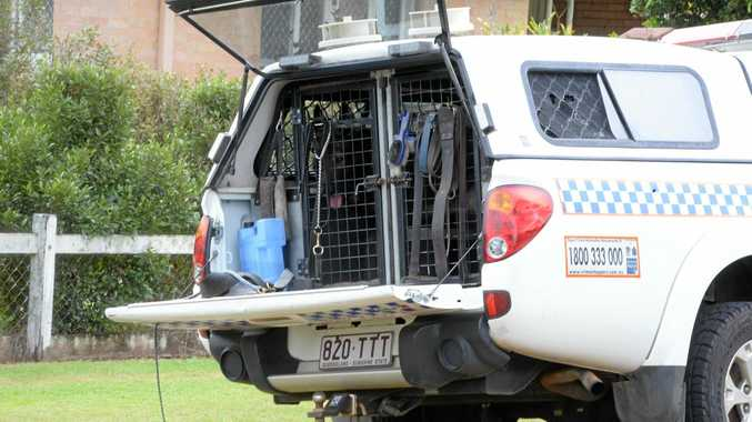 The police dog squad was called in to help search for a man in Nambour overnight.