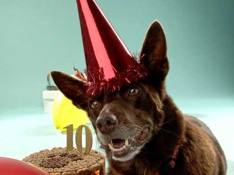 You are likely to see more birthdays if you own a dog