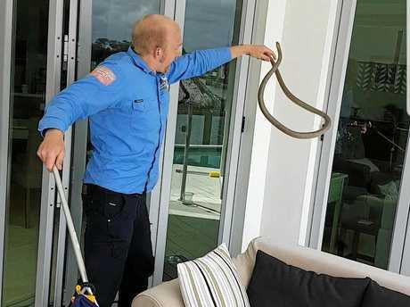 Snake Catcher 24/7 - Sunshine Coast's Stuart McKenzie's brush with a Eastern Brown.