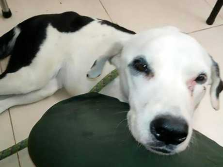 Vets said the dog was no more than two years old. Picture: CEN/Australscope