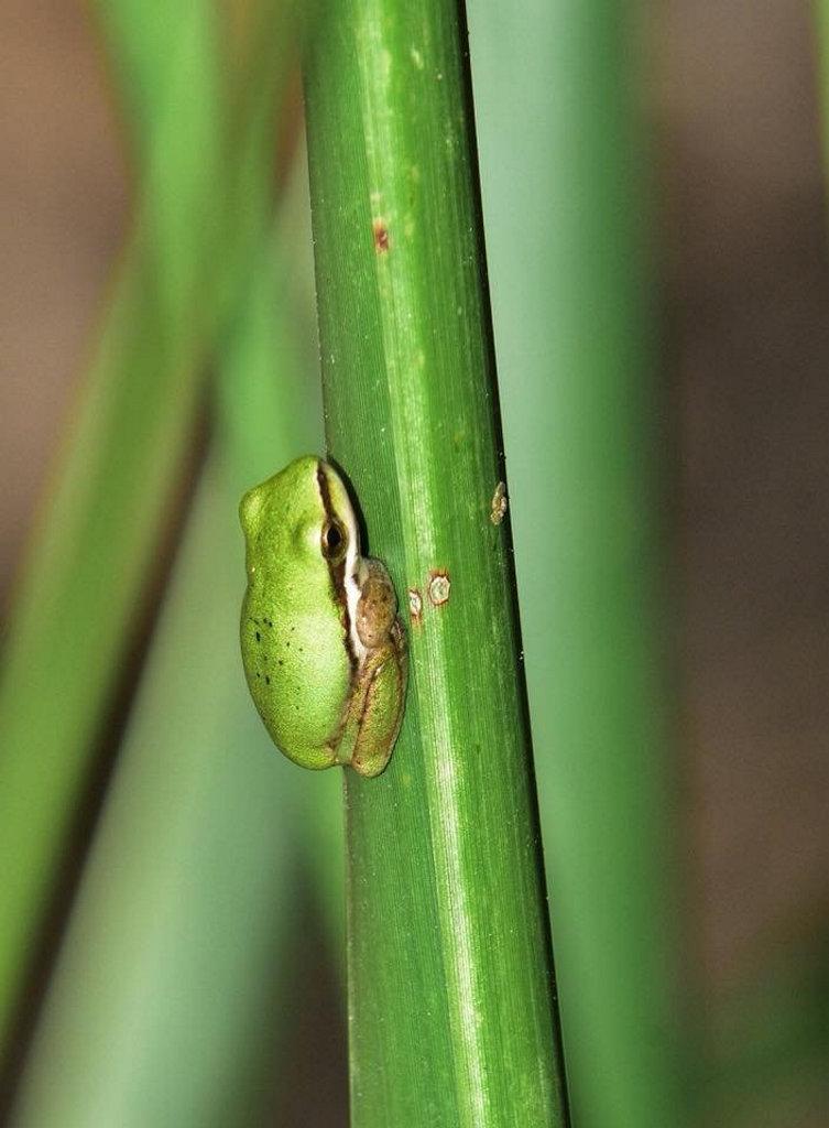 Lesley Vickers - tiny frog taken at Kholo Gardens.
