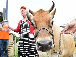 HOLY COW: One Nation milking the media attention