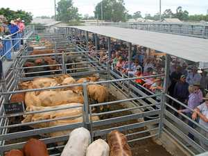 CQ cattle: Market holds onto prices