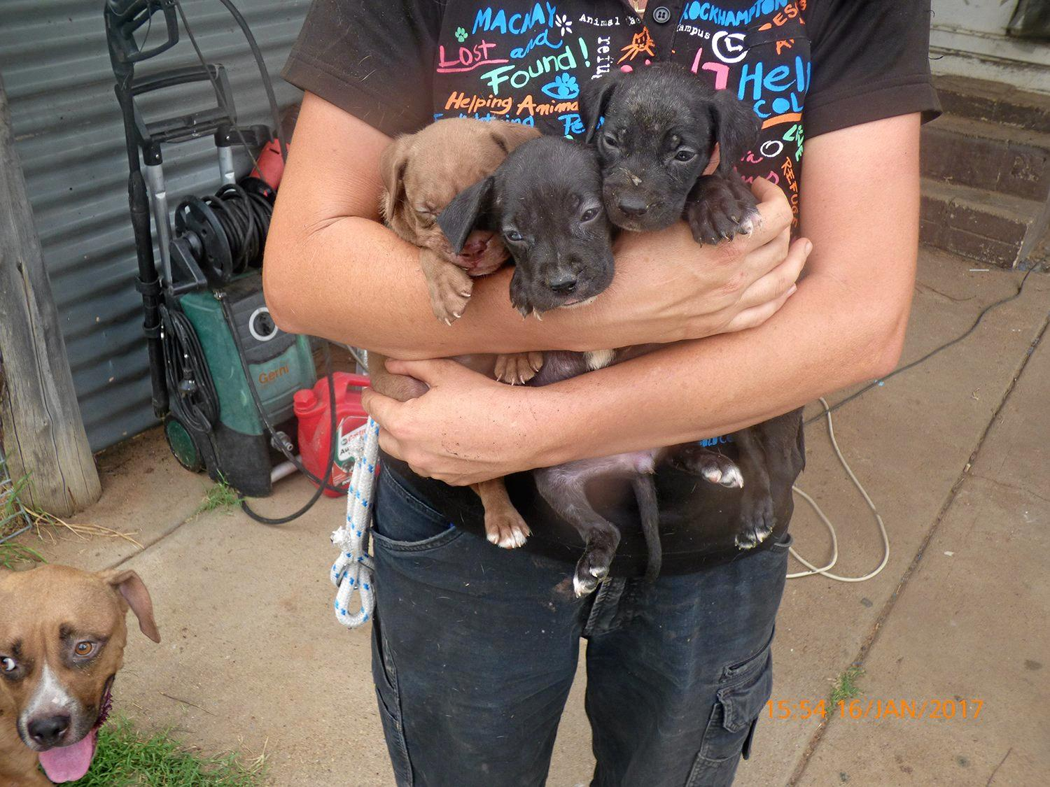 PUPPY FARM: Some of the dogs seized from a Glenarbon property where an alleged puppy farm was uncovered on Monday.