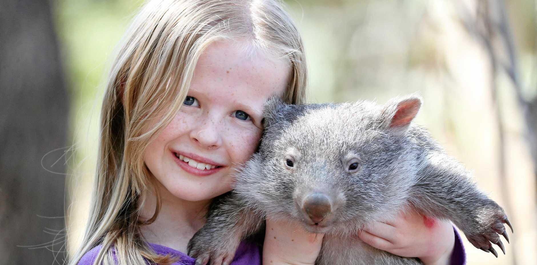 Maddi Robinson, 7, with Betty the baby wombat.