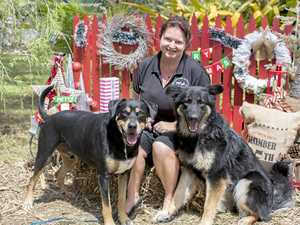 Snap a bargain at Maryborough Refuge fundraiser