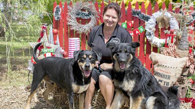 CUTE: Maryborough Animal Refuge manager Blair Harris with her puppies both rescued from the refuge (from left) Bruiser and Xanthe at last year's fundraiser Christmas photoshoot.