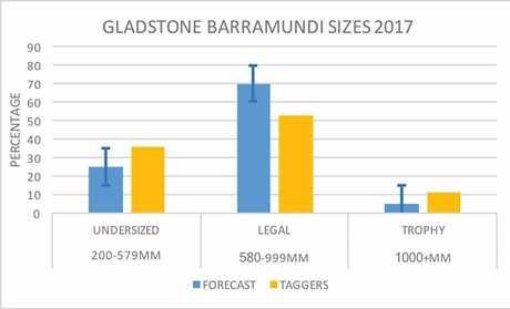 Gladstone barramundi sizes in 2017.