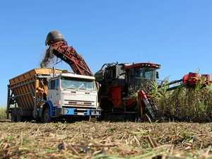 Big picture cane production