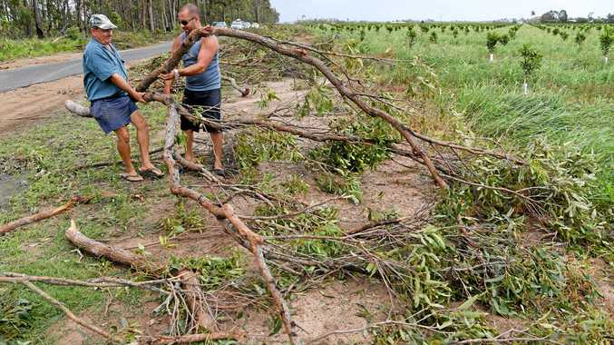 STORM DAMAGE: Vic Rizzo and his son Peter Rizzo clear fallen trees from their nut crop along Tolls Road Welcome Creek.