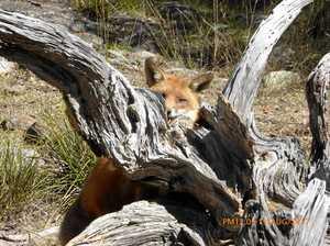 Damaging truth hidden in nature's wild beauty