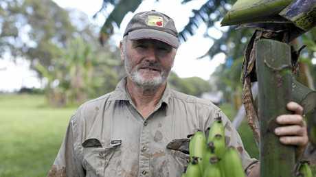 David Peasley has been researching three varieties of Panama-resistant bananas at this Duranbah trial site.