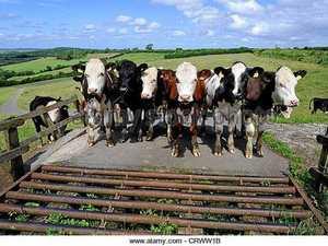 Grid policy outrages Raglan farmers