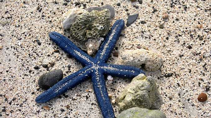 A starfish washed up on to the beach.