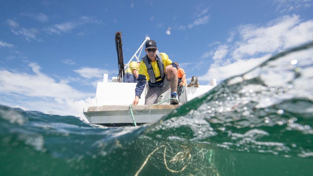 Contractors assist scientists deploy shark nets off the coast of Ballina. Picture: Luke Marsden
