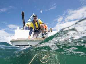 Shark net vandals face $22,000 fines as 'lives put at risk'