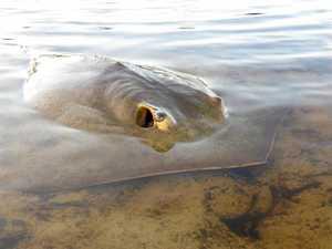 Mass fish kill from creek drainage under investigation