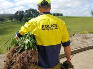 $5 million worth of cannabis seized by police
