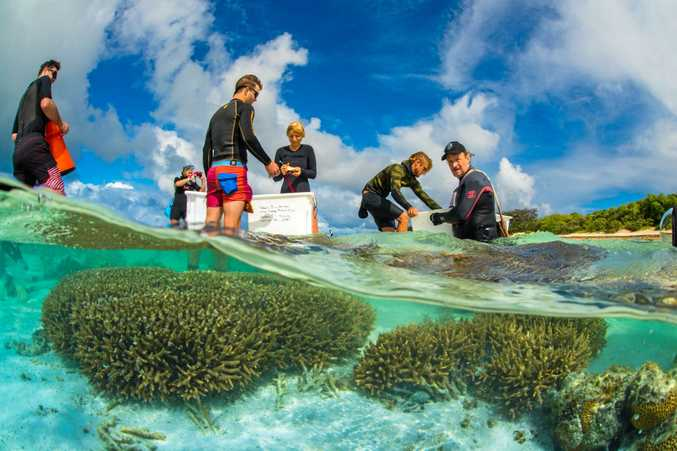 Professor Peter Harrison of Southern Cross University and his research team in the water.