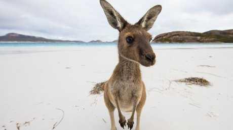 Lucky Bay, Cape Le Grand National Park, WA. Picture: Sean Scott / Tourism Australia
