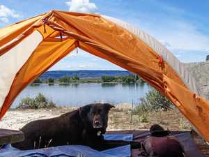 Canine camping: Tips to keep your pet safe over Christmas