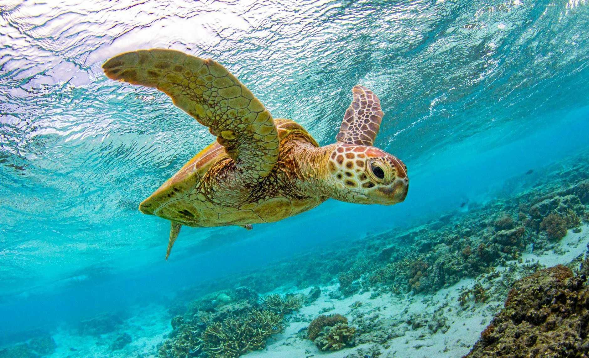 Lady Elliot Island Eco Resort received $2 million in funding.