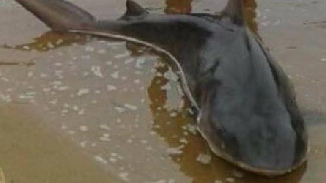Two Sydney fishermen caught a shark in Georges River.