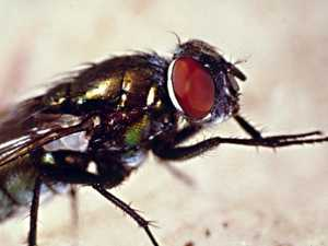Why you should never eat food a fly has been on