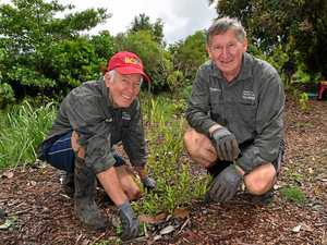 How to get involved in shaping Coast's native bushlands