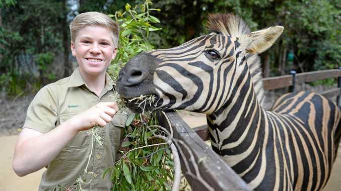 BIRTHDAY BOY: Australia Zoo is planning a massive day of celebrations for Robert Irwin's 14th birthday on Friday.