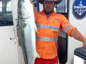 Powell lands on biggest catch list with massive kingfish