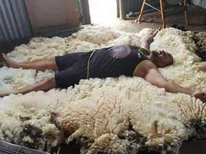 Shearer accepts challenge of sheep with three years wool