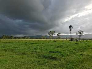 CQ farmers celebrate early Christmas as rains spread joy