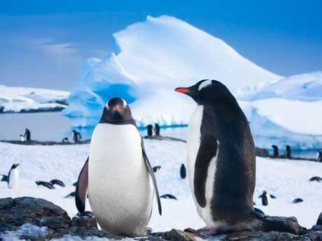 Cruising Antarctica. Picture: Chimu Adventures