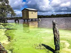REVEALED: Why bright green slime took over Maroochy River
