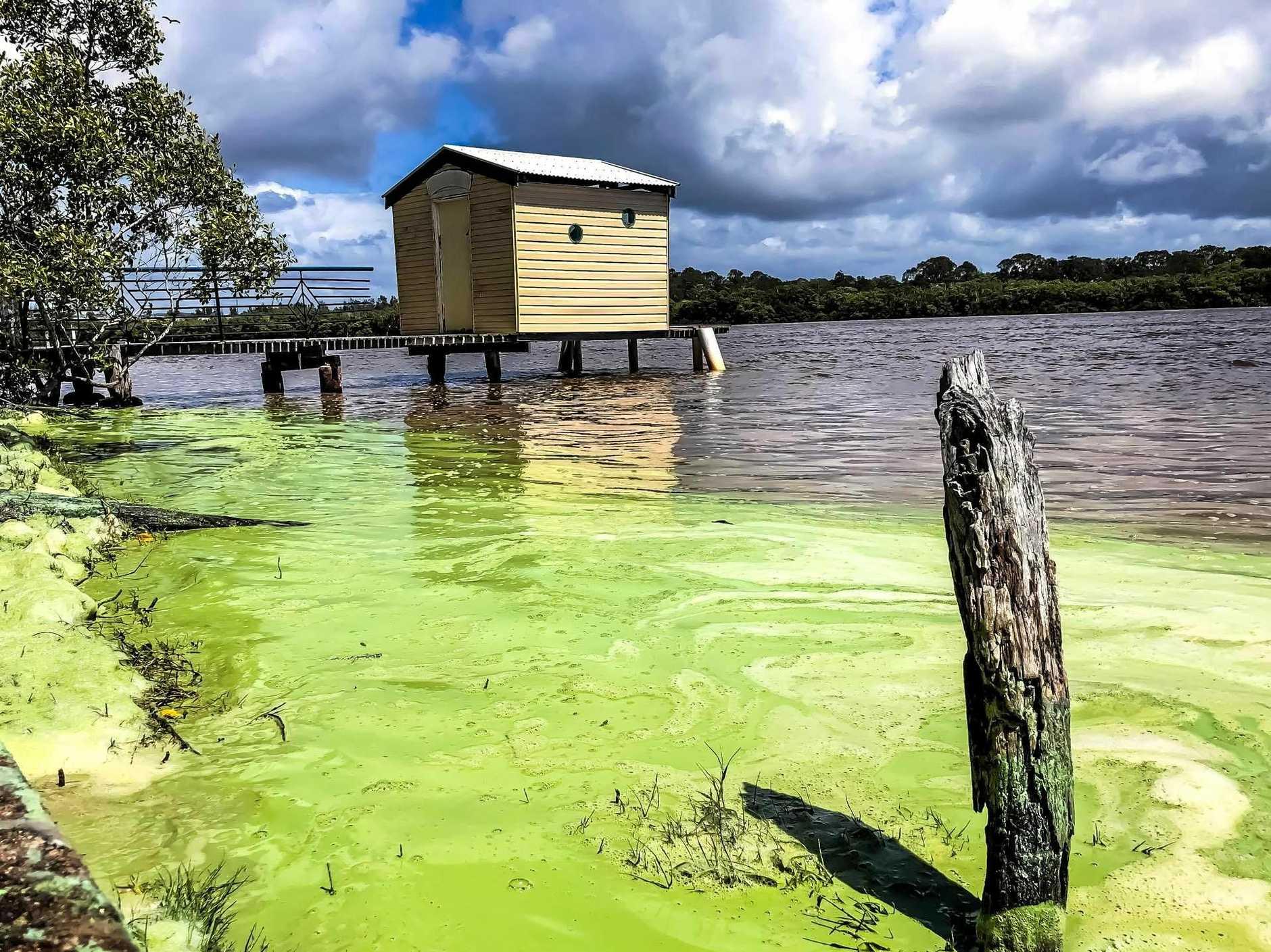 FLUORESCENT: Green foam slick along Maroochy River.