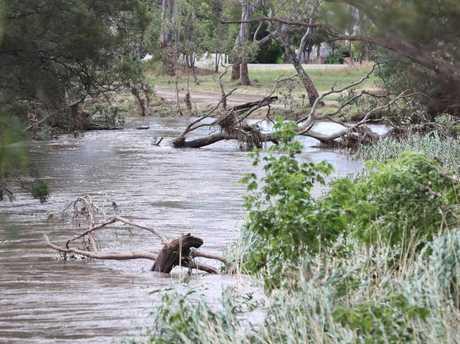 Fallen trees litter the creek in Euroa. Picture: Alex Coppel.