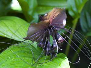 GARDENING: Wing it with this cool-looking plant