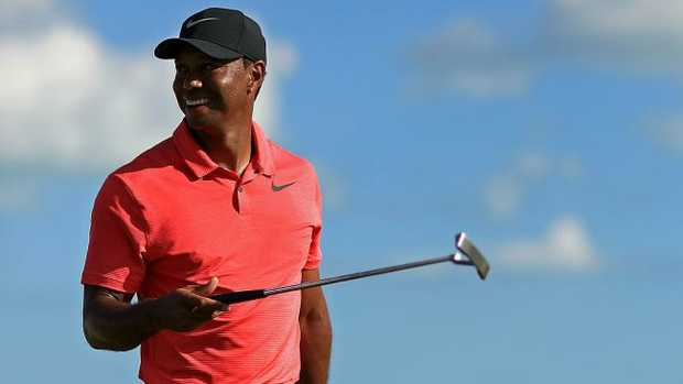 Tiger still in the woods