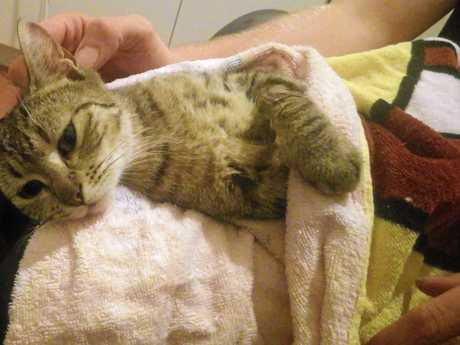 Toogoolawah stray Sophie being nursed to health by Tamika Kirby, after the community pulled together to save the cat.