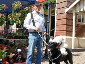 Joe the pup spreads Christmas cheer