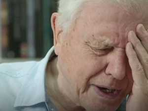 The brutal scene too much for Attenborough